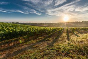 Venditori di vino o di esperienze? 5 spunti operativi per entrare nel mondo dell'enoturismo.
